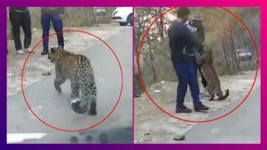 Young Leopard Strolls On Highway: পর্যটকদের সঙ্গে খেলায় মত্ত 'বাচ্চা' লেপার্ড, দেখুন ভাইরাল ভিডিও
