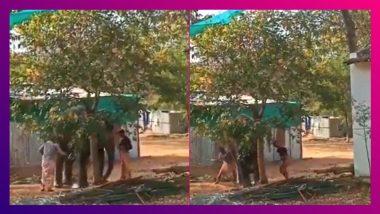 Shocking Animal Cruelty Caught On Camera: মর্মান্তিক! গাছের সঙ্গে বেঁধে লাঠি দিয়ে বেধড়ক মার হস্তিনী