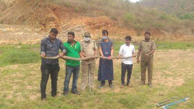 Odisha: ওড়িশার গ্রাম থেকে উদ্ধার ১৪ ফুটের কিং কোবরা