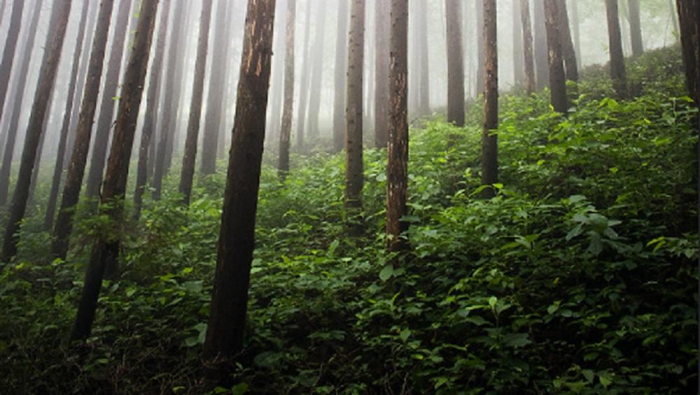 Forest Breathing : জঙ্গলে গভীর স্পন্দন, যেন শ্বাস নিচ্ছে 'ভয়ঙ্কর' বনাঞ্চল, ভাইরাল ভিডিয়ো