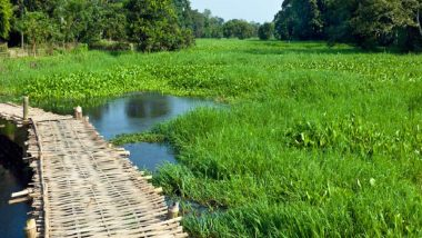 Assam: রিপোর্টিং করতে গিয়ে পাইথনের মুখে? অসমের মাজুলি দ্বীপের 'নাটুকে' ভিডিয়ো ভাইরাল