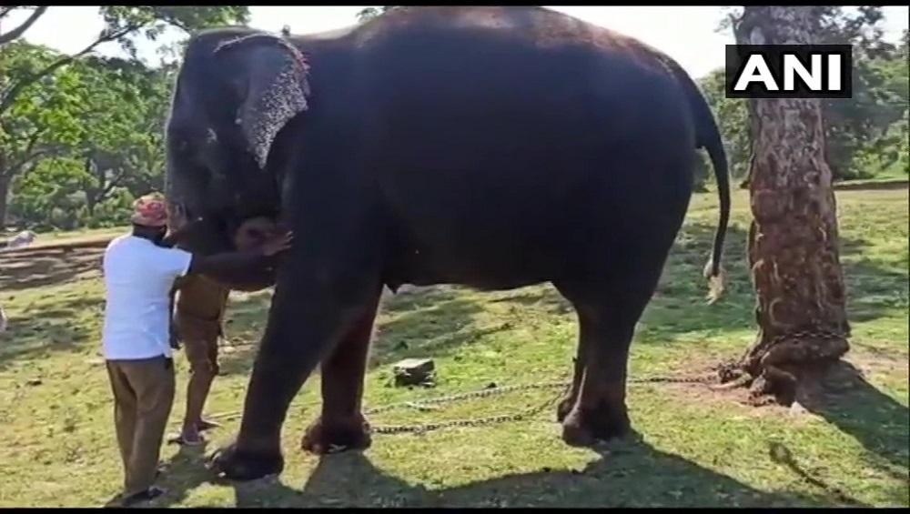COVID 19: তামিলনাড়ুতে করোনায় আক্রান্ত পরপর ২৮টি হাতি, চাঞ্চল্য