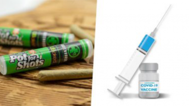 Free Marijuana for Taking COVID-19 Vaccine: এখানে কোভিডের টিকা নিলে ফ্রিতে মিলছে গাঁজা, সীমিত অফার
