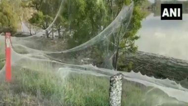Australia: মাকড়শার দৈত্যাকার জালে ঢাকল অস্ট্রেলিয়ার ভিক্টোরিয়া, ভাইরাল ভিডিয়ো