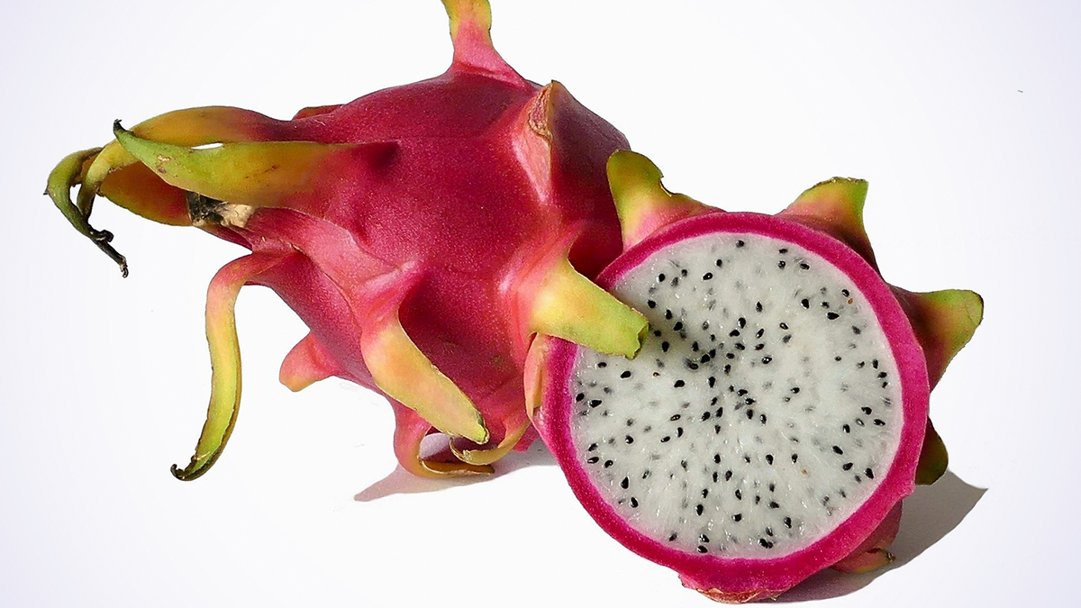 Dragon Fruit Export: মহারাষ্ট্র থেকে বিদেশি ড্রাগন ফল দুবাইতে রপ্তানি করা হয়েছে