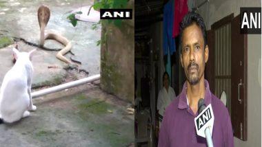Odisha: গৃহস্থের দরজায় গোখরো, পথ রোধ করে দাঁড়াল বিড়াল