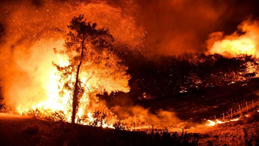 Italy Wildfire: দাবানলের গ্রাসে ইতালি, দাউ দাউ করে জ্বলছে গ্রোটেরিয়া, সতর্কতা