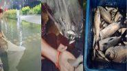 Kolkata Rain: নিউটাউনের রাস্তায় এক হাঁটু জল, পটাপট ১৫ কেজির কাতলা মাছ ধরলেন তরুণী