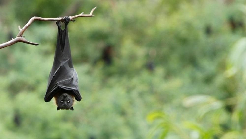 Nipah Virus Outbreak in Kerala:  সাবধান! কেরলে ছড়াচ্ছে নিপা ভাইরাস, দক্ষিণী রাজ্যে জারি সতর্কতা