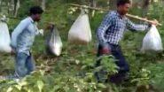 Chhattisgarh: ছত্তিশগড়ে ৮ কিমি নদী-পাহাড় টপকে মিড মিল রেশন কাঁধে নিয়ে ডিউটি শিক্ষকদের